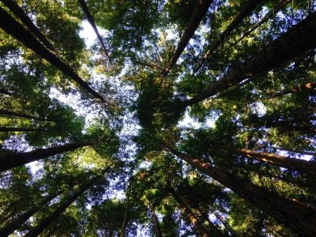 trees-skies